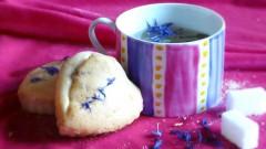 flower cake, Fanny Vasseur, tisanes, cueillette nomade, ambricourt