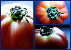 Trois tomates.jpg