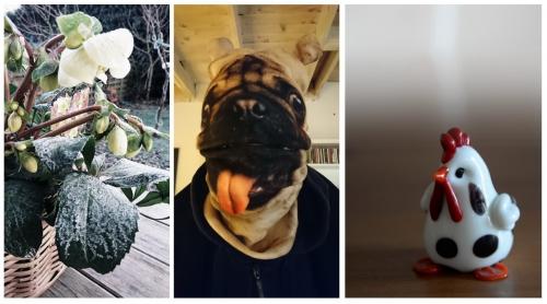collage r.jpg
