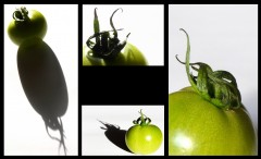 tomates 2.jpg