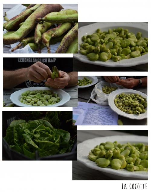 Fèves au vert, fèves