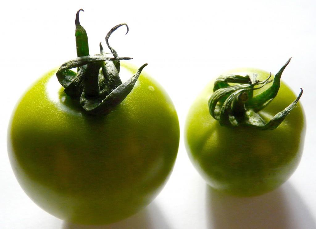 Tomates vertes au vinaigre la cocotte - Cuisiner des tomates vertes ...