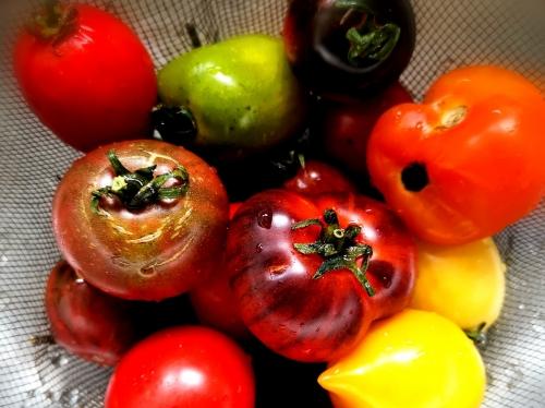 Sauce tomate, la cocotte, la voix du nord