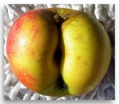 la mela1.jpg